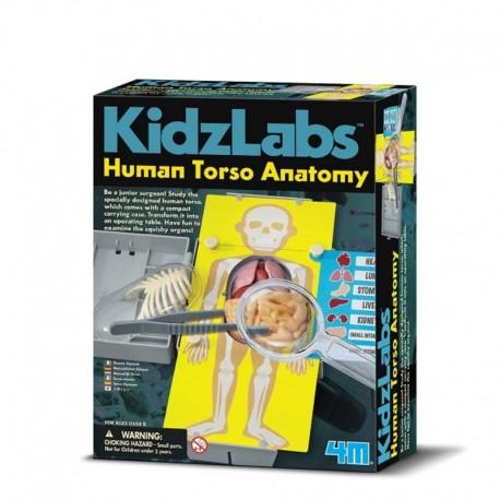 4M Anatomía del Torso Humano